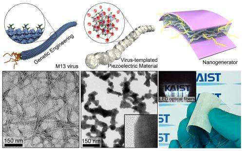 KAIST developed the biotemplated design of piezoelectric energy harvesting device