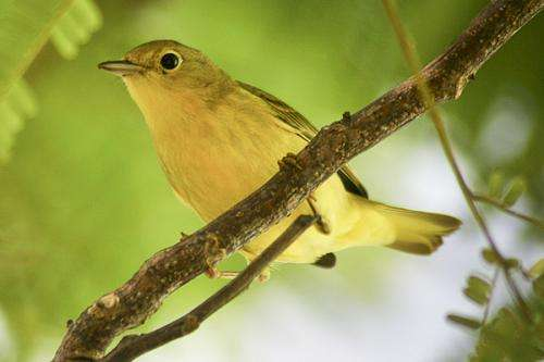 Pest-eating birds mean money for coffee growers, biologists find