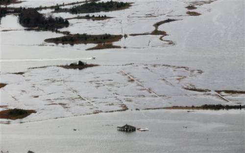 Sandy's wake leaves shore birds in dire straits