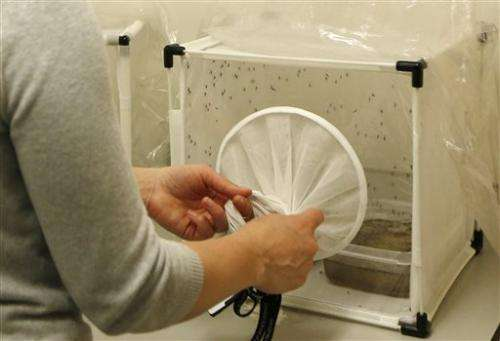Stinky feet may lead to better malaria traps