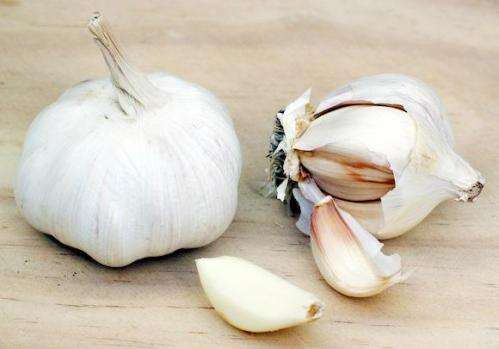 Study indicates oral garlic not useful in treating vaginal thrush