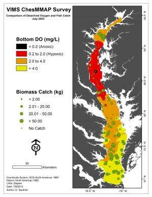 Study shows 'dead zone' impacts Chesapeake Bay fishes