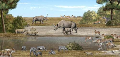 Tandem-horned rhino from the Late Miocene of northwestern China reveals origin of the unicorn Elasmothere