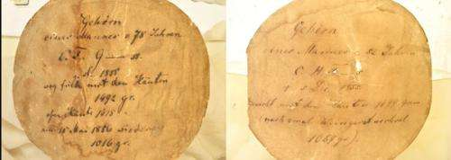 Unravelling the true identity of the brain of Carl Friedrich Gauss