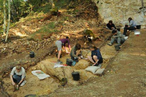 Research finds Neandertals, not modern humans, made first specialized bone tools in Europe