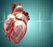 Researchers solve 20-year puzzle of how heart regulates its beat