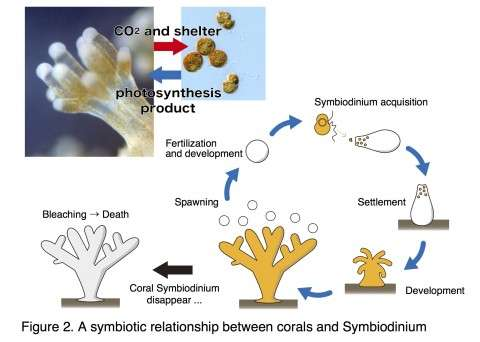 A coral symbiont genome decoded for first time