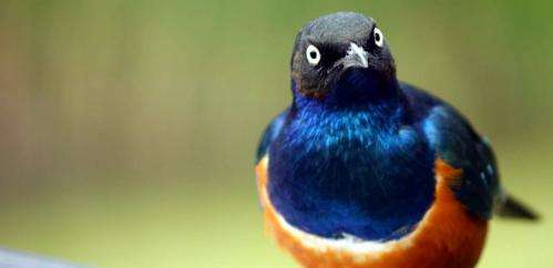 Birds of a feather create new species together--and here's how