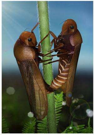 Earliest record of copulating insects discovered