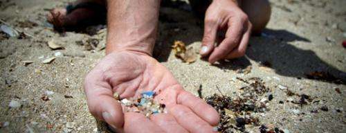 Microplastic pollution confirmed to be a threat to marine biodiversity