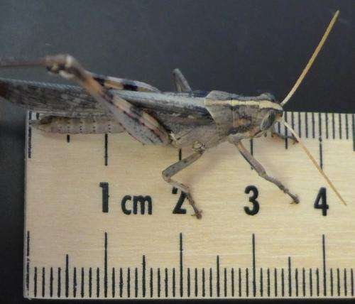 UC Riverside entomologist seeks grasshoppers