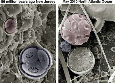Climate change clues from tiny marine algae -- ancient and modern