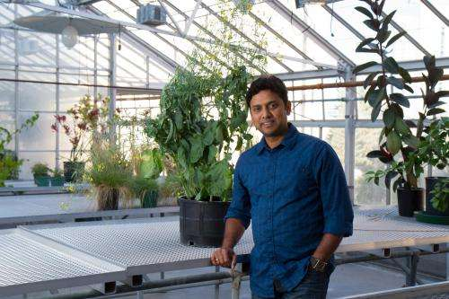 Discovery offers bio-solution to severe canola crop losses