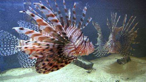 Lionfish beyond reach of divers worry researchers