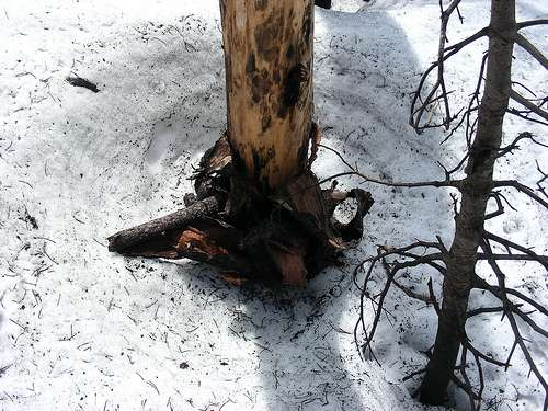 New study finds charred forests increase snowmelt rate