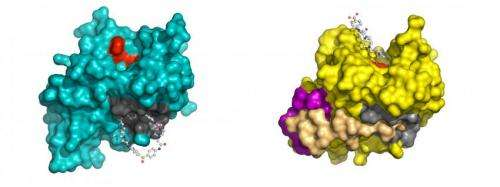 Scientists identify promising antiviral compounds