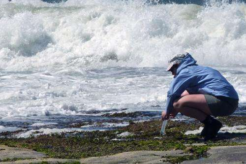 New research suggests seaweed species may adapt to higher temperatures