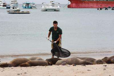 Survival of the Galapagos sea lion
