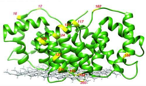 UCSB research group develops a new tool for studying membrane protein structure
