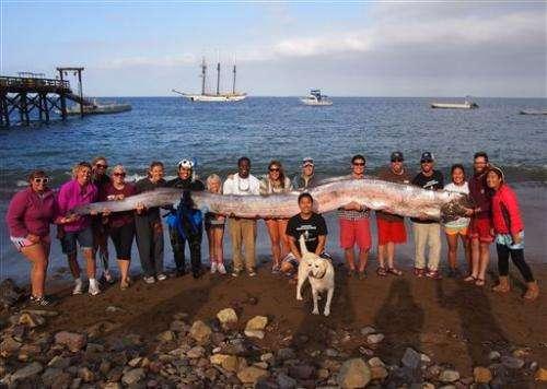 5-meter sea creature found off California coast