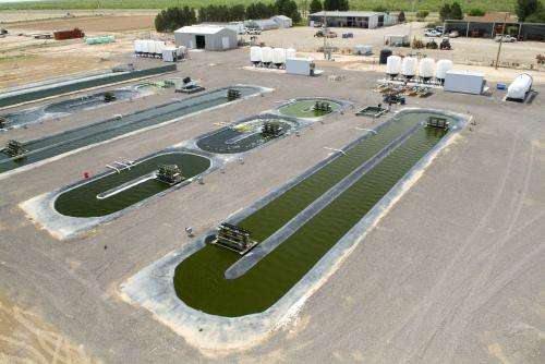 Groundbreaking algae research continues at Pecos