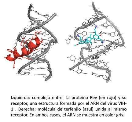 Researchers block HIV replication