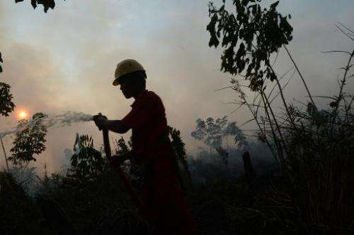 An Indonesian worker from a private palm oil concession company extinguishes a forest fire on June 29, 2013 in the Kampar distri