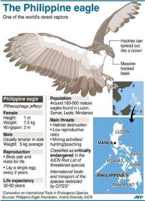 Graphic fact file on the Philippine eagle, one of the world's rarest raptors
