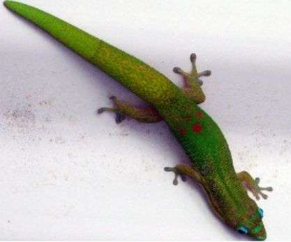 Surfaces inspired by geckos can be switched between adhesive and non-adhesive states