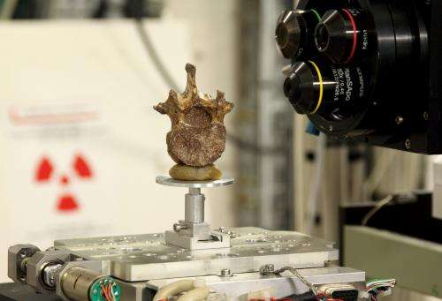Scientists reassemble the backbone of life with a particle acceleratorynchrotron X-rays