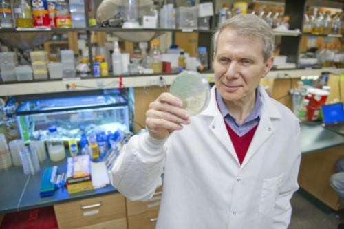 Researchers discover new treatment to cure MRSA infection