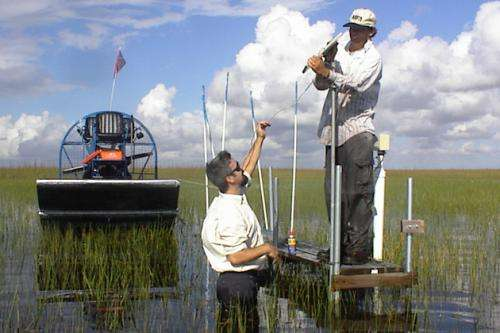 Abrupt climate shift may have altered Everglades 2,800 years ago