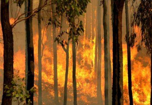 A bushfire burns out of control in the Kiewa Valley, Australia, on February 10, 2009