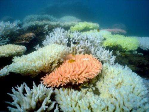 A coral reef on in Australia's Great Barrier Reef, October 2, 2012