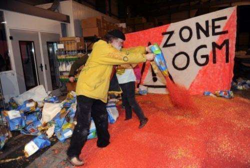Activists rip open bags of MON 810 GM maize at a Monsanto site in Trebes near Carcassonne, France on January 23, 2012