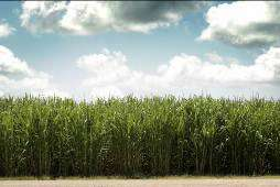 Advance in re-engineering photosynthesis to make drugs, compounds or ingredients