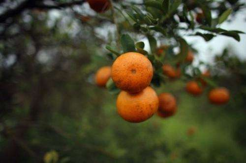 A European farmers' union called for the suspension of South African citrus fruit imports