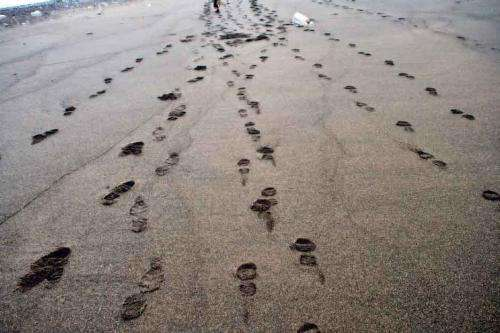 A formula that can calculate a person's speed by just looking at their footprints