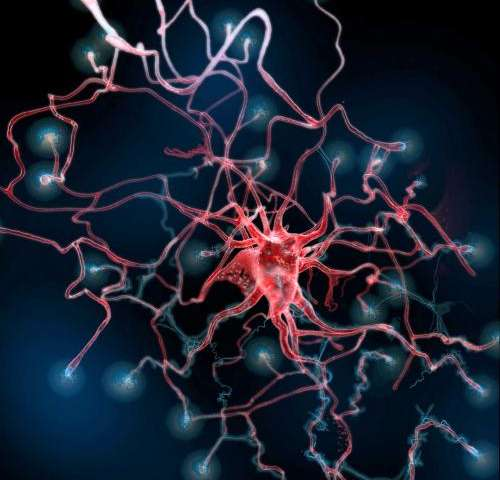 After brain injury, new astrocytes play unexpected role in healing