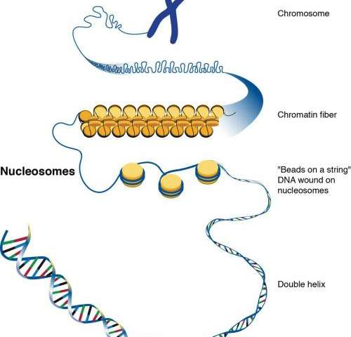 Aging cells lose their grip on DNA rogues