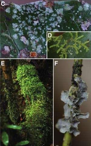 A gluttonous plant reveals how its cellular power plant devours foreign DNA