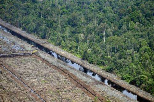 A Greenpeace photo shows  an area after logging and virgin rainforest in the province of Riau in Sumatra, August 5, 2010