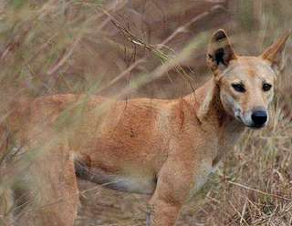 Agriculture and parting from wolves shaped dog evolution, study finds