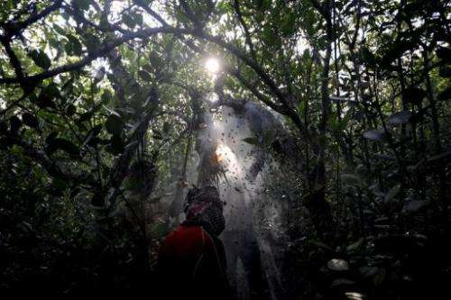 A honey collector pictured in Bangladesh's Sundarbans mangrove forest, some 350kms south-west of Dhaka, on April 2, 2009