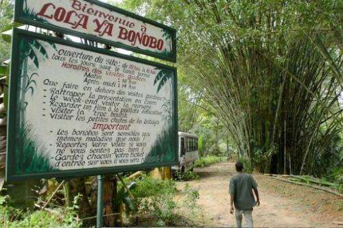 A man walks on March 6, 2013 past the entrance of a sanctuary outside Kinshasa for bonobos saved from  trafficking