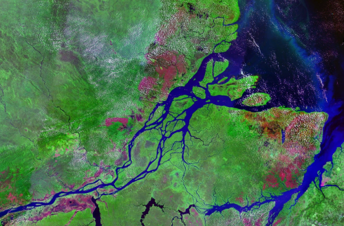 Amazon River exhales virtually all carbon taken up by rain forest