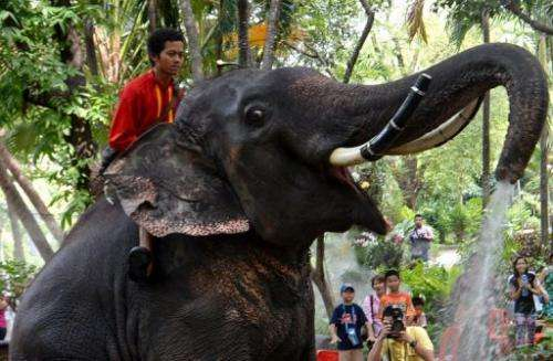 An elephant sprays water at Dusit Zoo in Bangkok on April 10, 2013 during the Songkran festival