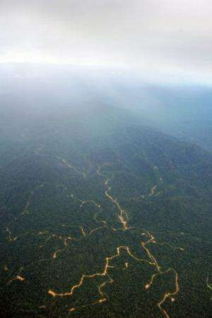 A network of logging roads on a forested mountain in West Kalimantan province on Borneo island on July 6, 2010