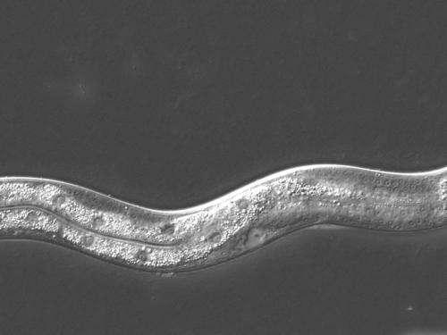 Anti-ageing hormone receptors