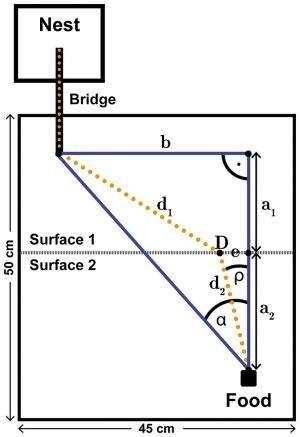 Ants follow Fermat's principle of least time